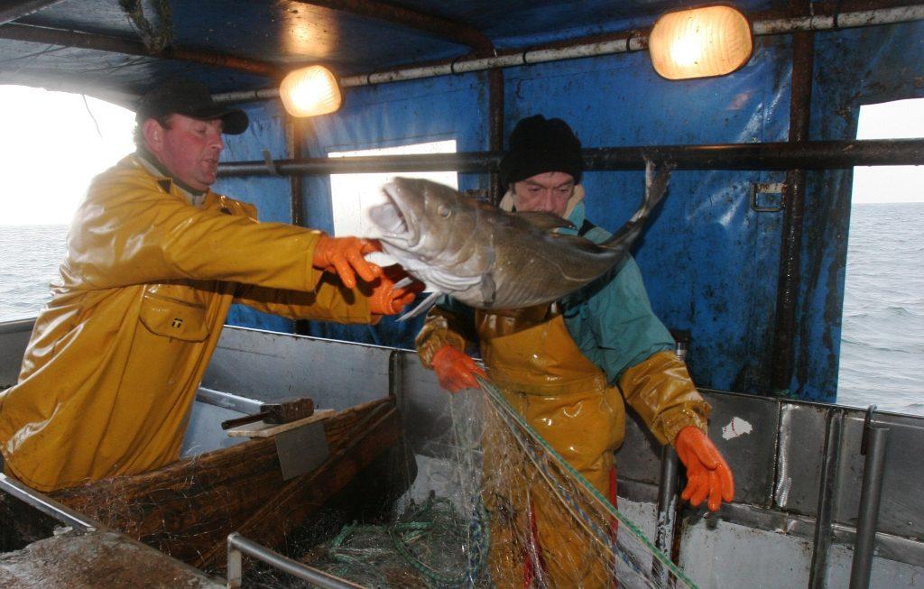 Comment acheter du poisson ?