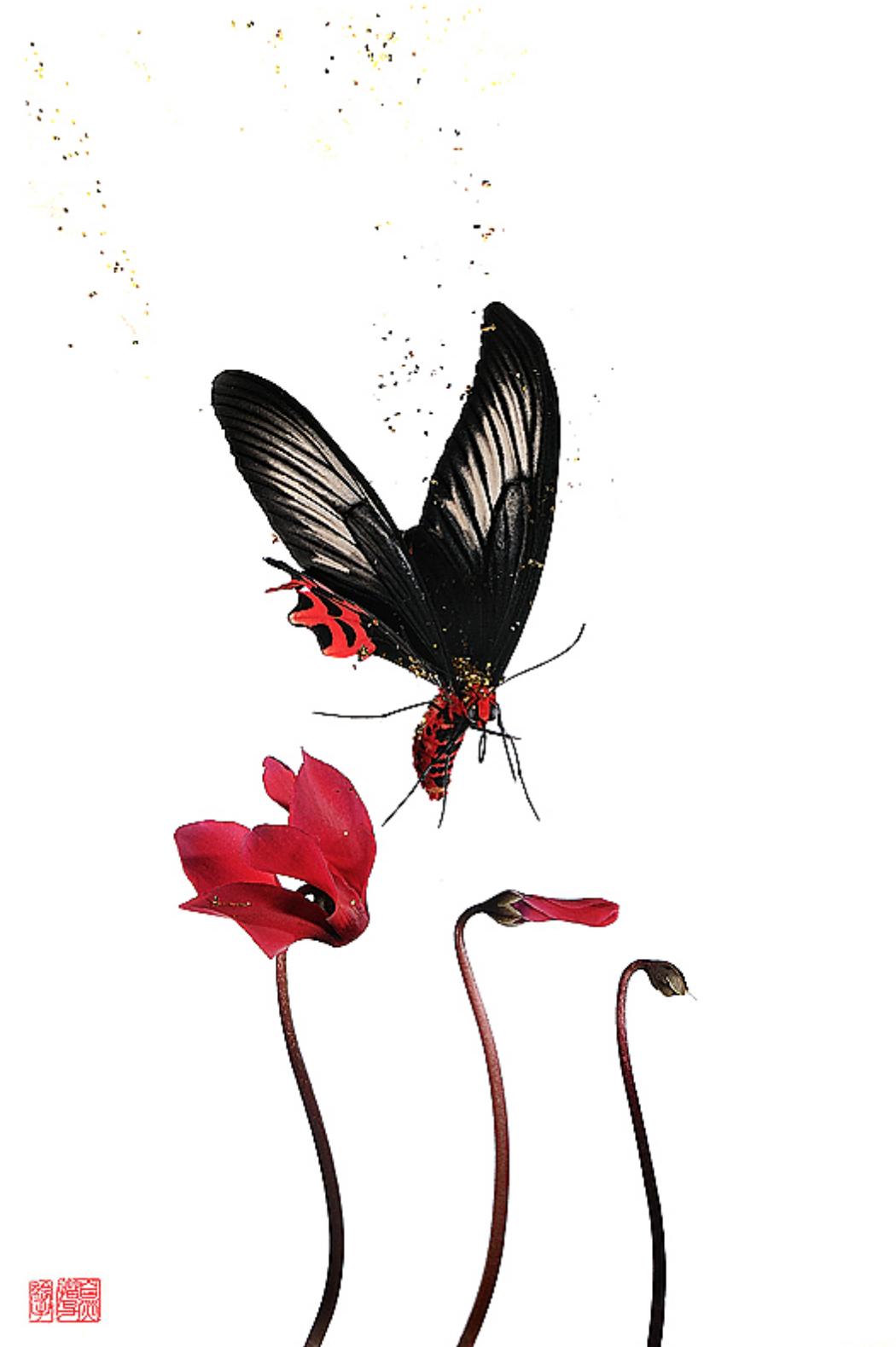 Les papillons de Stéphane Hette - Portfolio