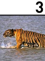 3 - TIGRE