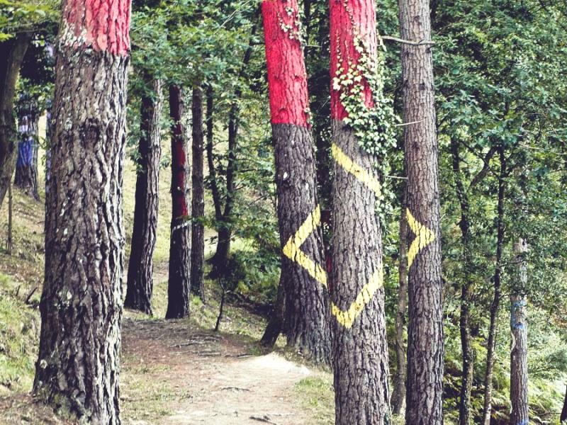 Bosque Oma_14 - la forêt animée