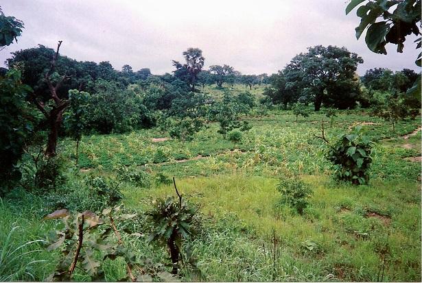 Cultures-associees-au-Nord-Benin-Photo-J.-Capl - La bio