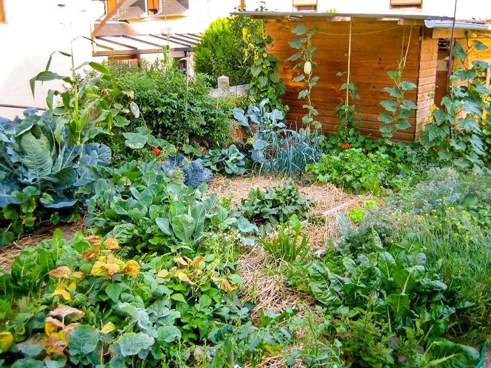 permaculture le paillage pour r g n rer le sol de nos jardins. Black Bedroom Furniture Sets. Home Design Ideas
