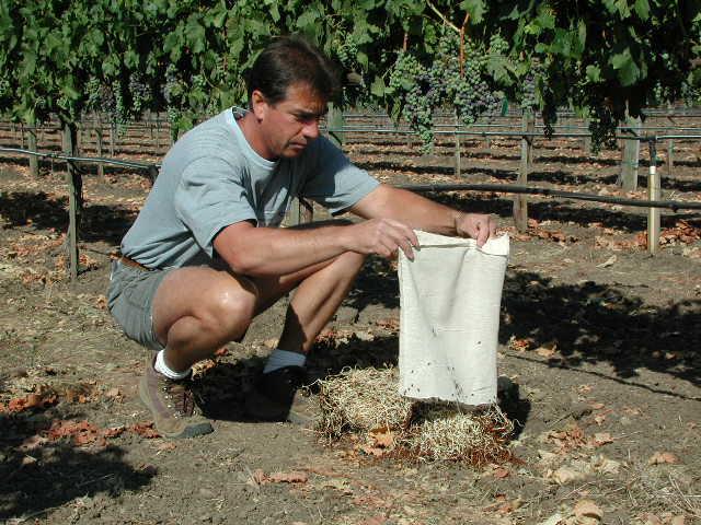 Photo : montelena.com - vignoble