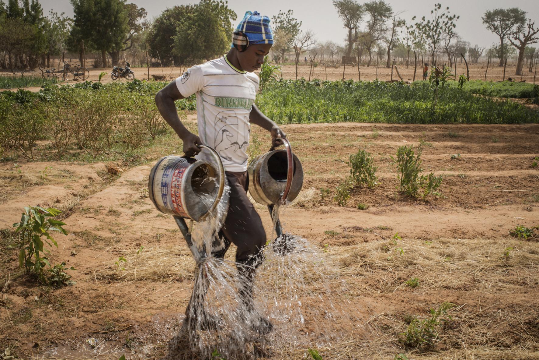 Le miracle de l'agroécologie au sahel. Photographie : Jérômine Derigny.