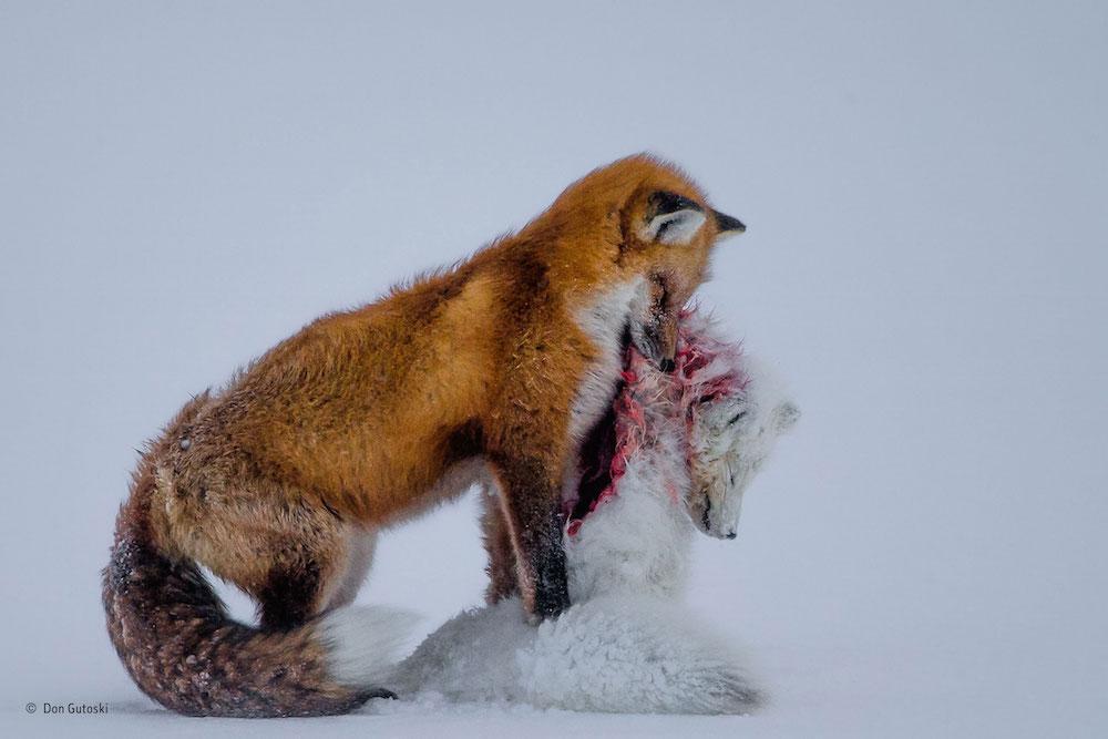 Wildlife Photographer of the Year_Kaizen_01