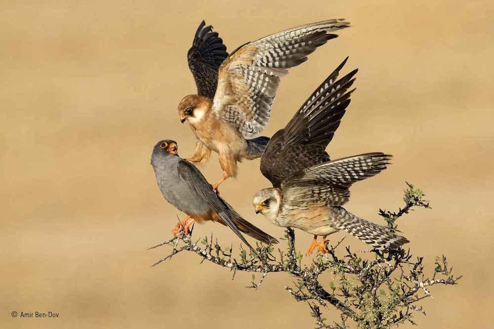 Wildlife Photographer of the Year_Kaizen_03