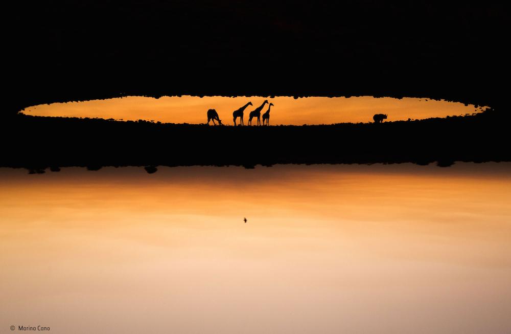 Wildlife Photographer of the Year_Kaizen_06