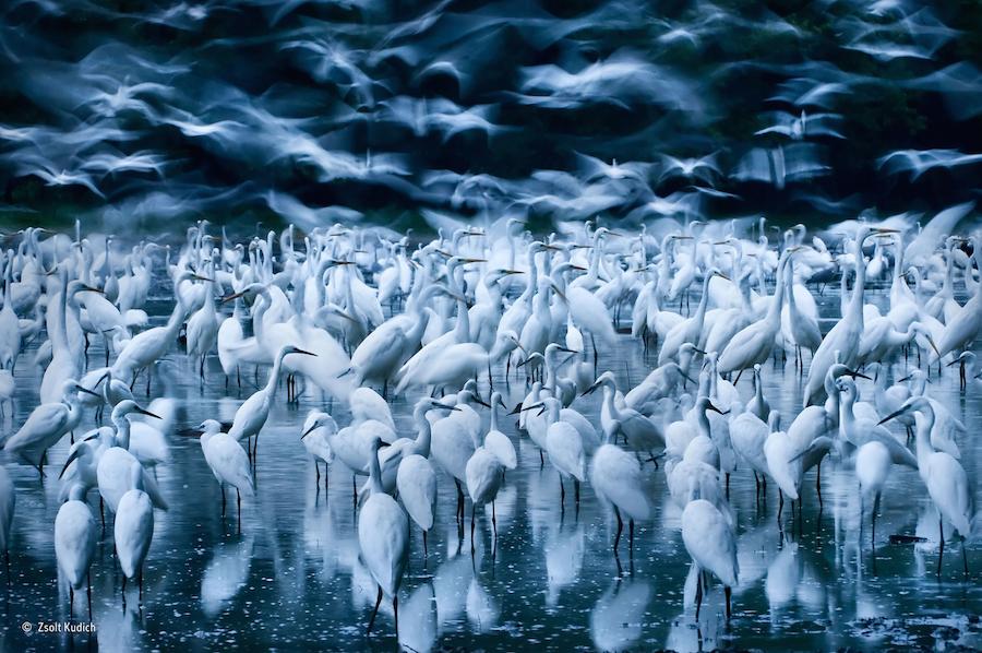 Wildlife Photographer of the Year_Kaizen_07