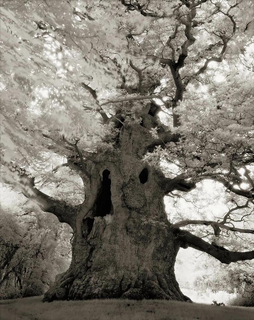 ancient-trees-beth-moon-16