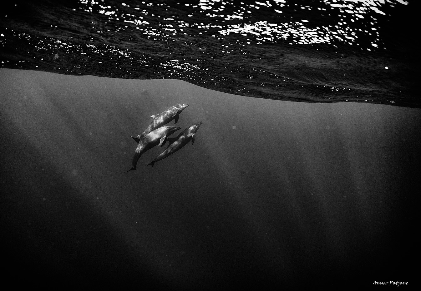 dauphins0