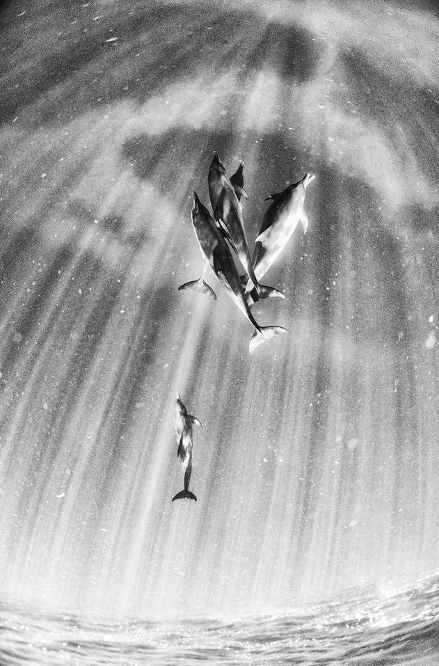 dauphins3