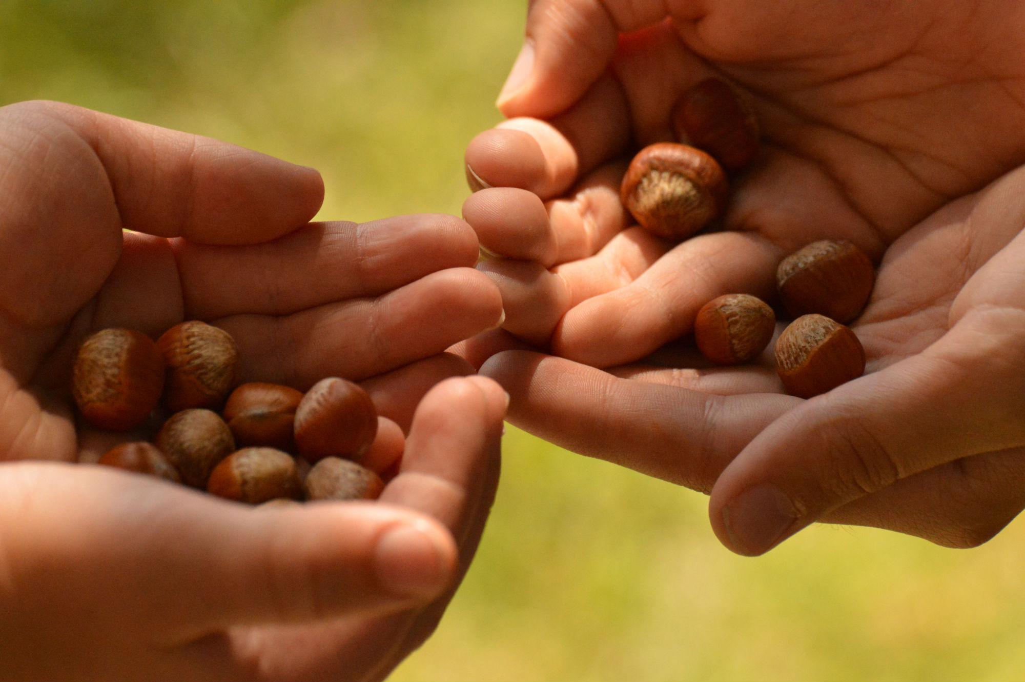 Un potager en permaculture pour le collège / © Nicolas Detrin - Kaizen Magazine