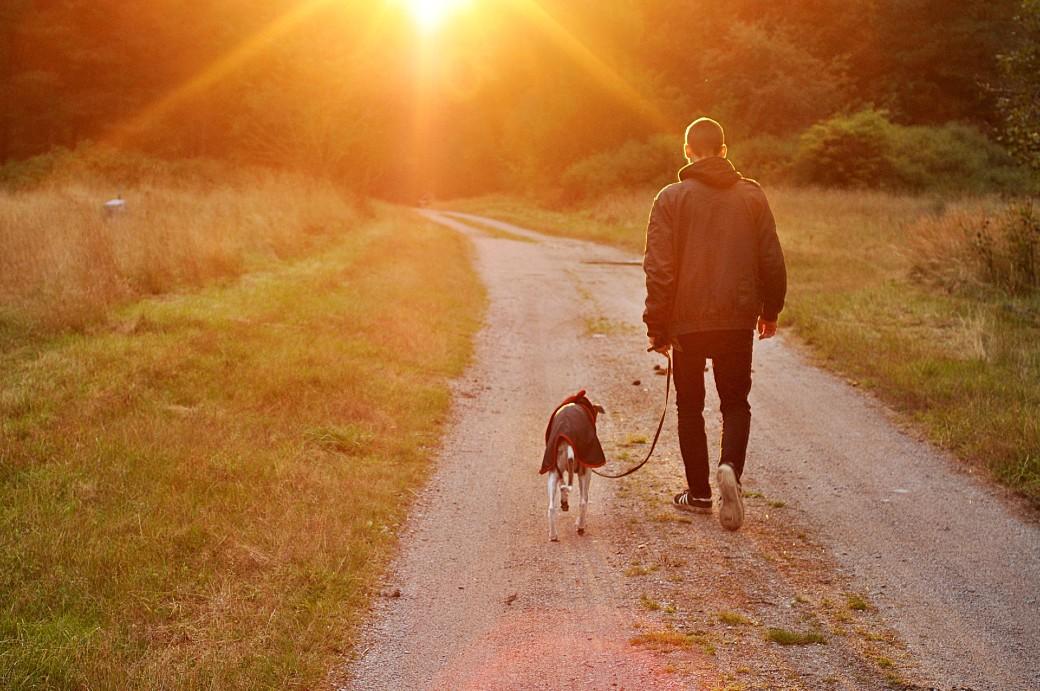 Christophe André et la marche : être le chien de soi-même