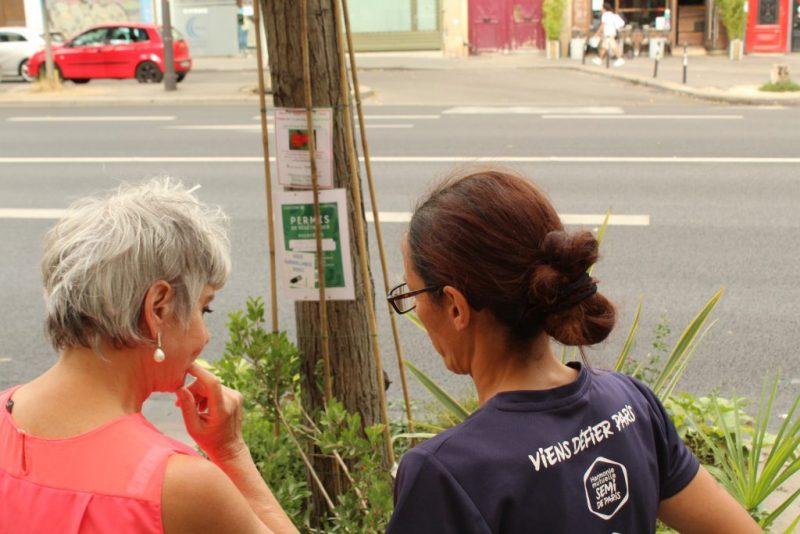 Evelyne et Alice inspectent les plantes du pied d'arbre, compris dans le permis de végétaliser / © Cypriane El-Chami