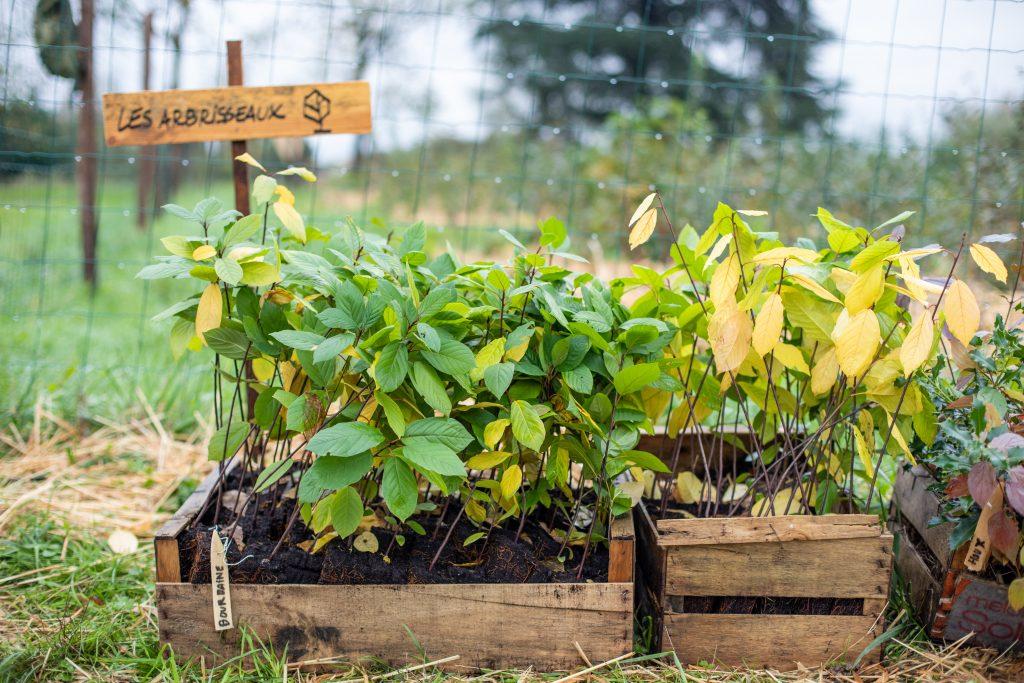 Arbres à planter pour la forêts de l'Abbaye de Villeneuve / ©Cecile DeBise