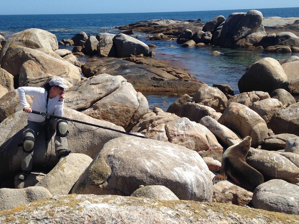 Isabelle Charrier enregistre un lion de mer australien, en Australie.